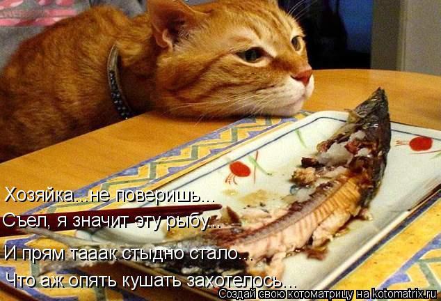 Котоматрица: Хозяйка...не поверишь... И прям тааак стыдно стало... Что аж опять кушать захотелось... Съел, я значит эту рыбу...