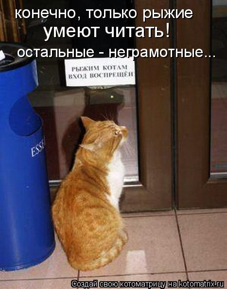 Котоматрица: конечно, только рыжие  остальные - неграмотные... умеют читать!