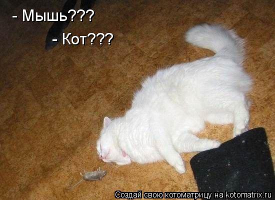 Котоматрица: - Мышь??? - Кот???