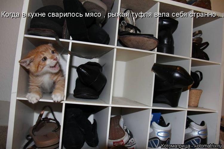 Котоматрица: Когда в кухне сварилось мясо , рыжая туфля вела себя странно ...