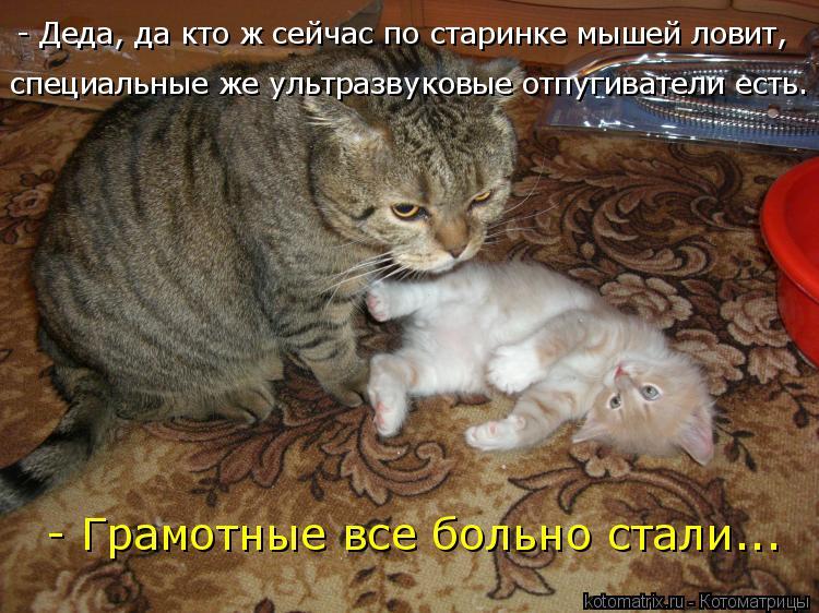 Котоматрица: - Деда, да кто ж сейчас по старинке мышей ловит, специальные же ультразвуковые отпугиватели есть. - Грамотные все больно стали...