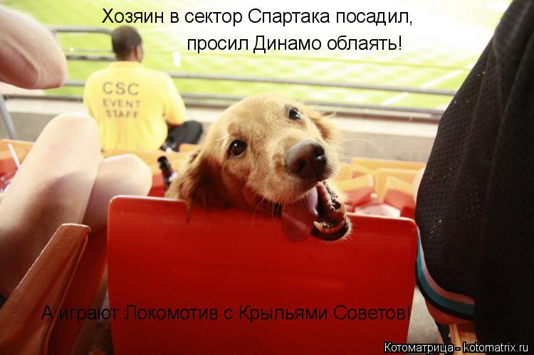 Котоматрица: Хозяин в сектор Спартака посадил, просил Динамо облаять! А играют Локомотив с Крыльями Советов!