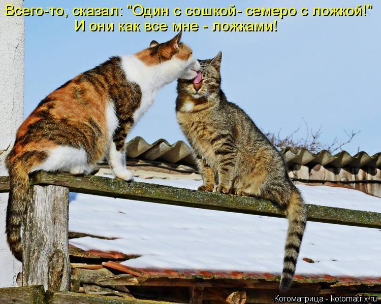 """Котоматрица: Всего-то, сказал: """"Один с сошкой- семеро с ложкой!"""" И они как все мне - ложками!"""