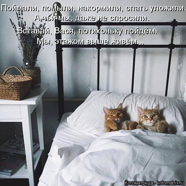 Котоматрица: Поймали, помыли, накормили, спать уложили. А чьи мы, даже не спросили. Вставай, Вася, потихоньку пойдём. Мы, этажом выше живём...