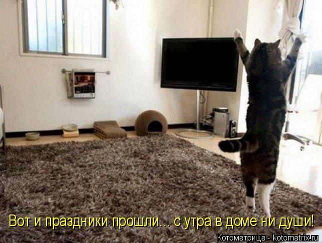 Котоматрица: Вот и праздники прошли... с утра в доме ни души!
