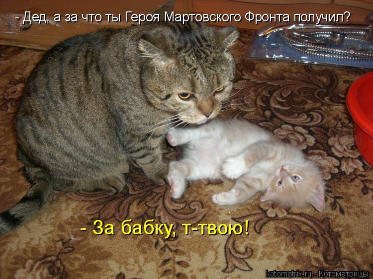 Котоматрица: - Дед, а за что ты Героя Мартовского Фронта получил? - За бабку, т-твою!