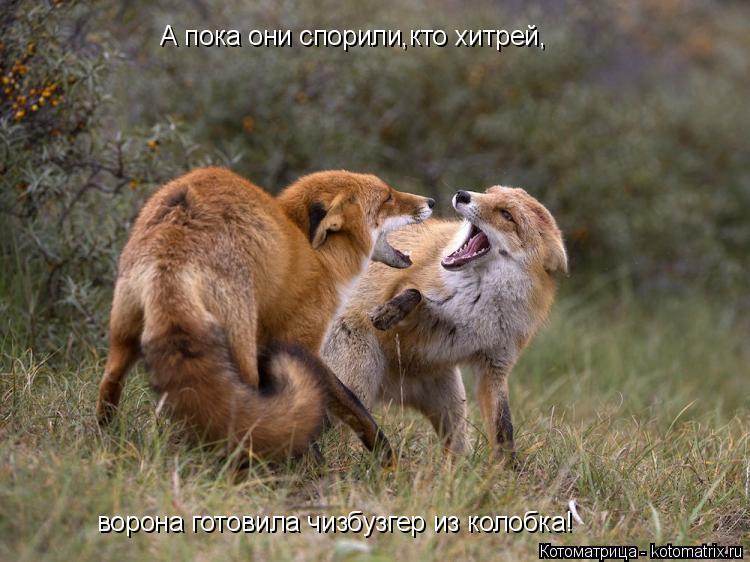 Котоматрица: А пока они спорили,кто хитрей, ворона готовила чизбузгер из колобка!