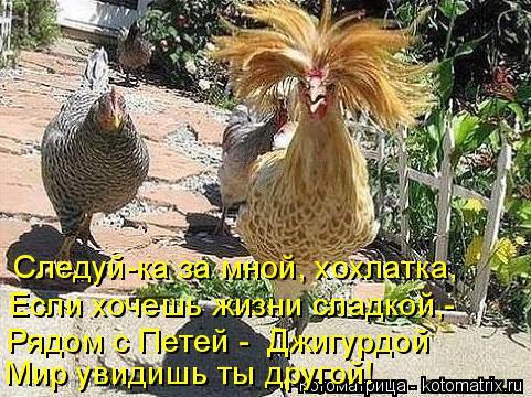 Котоматрица: Следуй-ка за мной, хохлатка, Если хочешь жизни сладкой,- Рядом с Петей -  Джигурдой Мир увидишь ты другой!