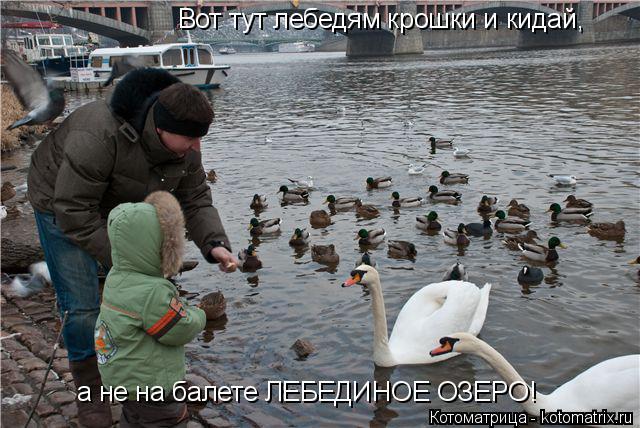 Котоматрица: Вот тут лебедям крошки и кидай, а не на балете ЛЕБЕДИНОЕ ОЗЕРО!