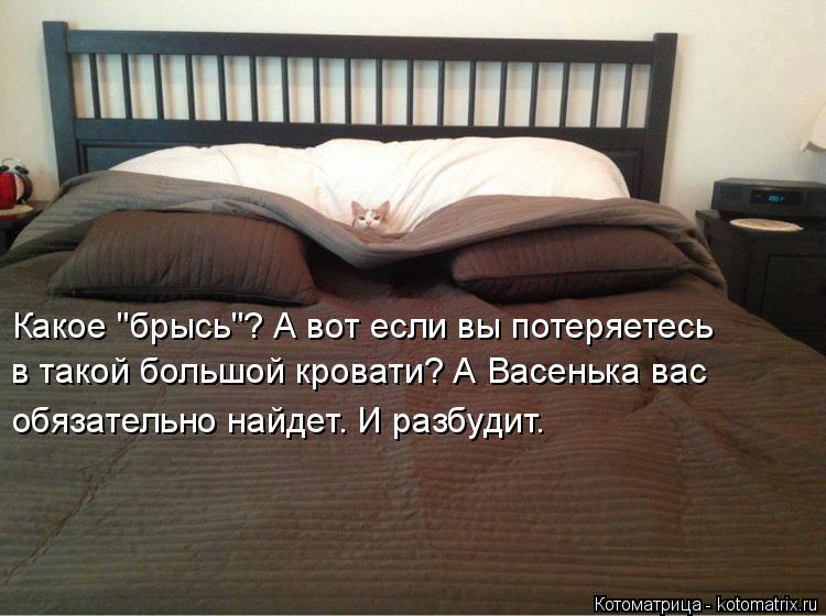 """Котоматрица: Какое """"брысь""""? А вот если вы потеряетесь в такой большой кровати? А Васенька вас  обязательно найдет. И разбудит."""