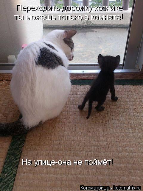 Котоматрица: Переходить дорожку хозяйке ты можешь только в комнате! На улице-она не поймёт!