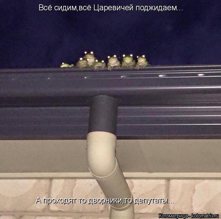 Котоматрица: Всё сидим,всё Царевичей поджидаем... А проходят то дворники,то депутаты...