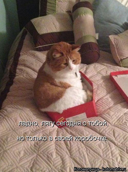 Котоматрица: ладно, лягу сегодня с тобой, но только в своей коробочке...