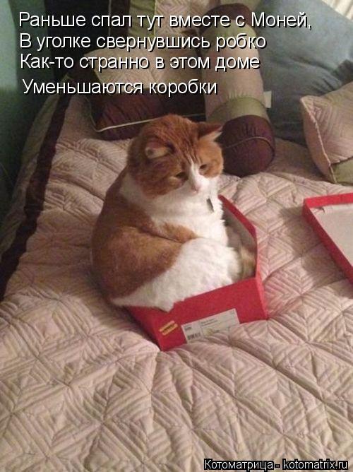 Котоматрица: Раньше спал тут вместе с Моней, В уголке свернувшись робко Как-то странно в этом доме Уменьшаются коробки