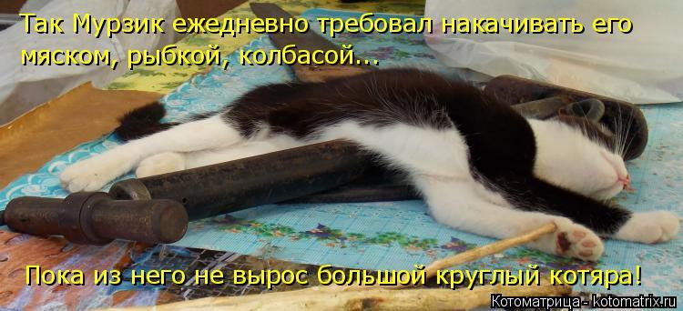 Котоматрица: Так Мурзик ежедневно требовал накачивать его мяском, рыбкой, колбасой... Пока из него не вырос большой круглый котяра!