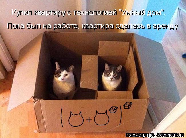 """Котоматрица: Купил квартиру с технологией """"Умный дом"""".  Пока был на работе, квартира сдалась в аренду"""