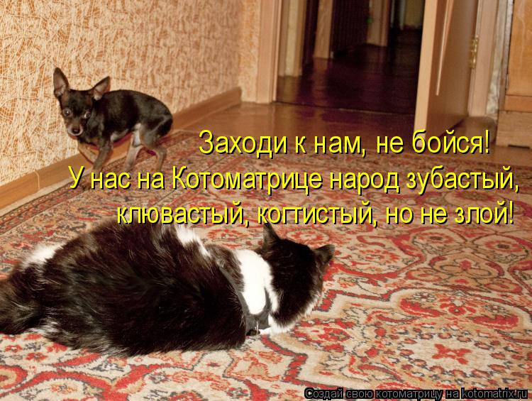 Котоматрица: У нас на Котоматрице народ зубастый,  клювастый, когтистый, но не злой! Заходи к нам, не бойся!