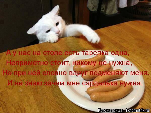 Котоматрица: А у нас на столе есть тарелка одна, Неприметно стоит, никому не нужна, Но при ней словно вдруг подменяют меня. И не знаю зачем мне сарделька н