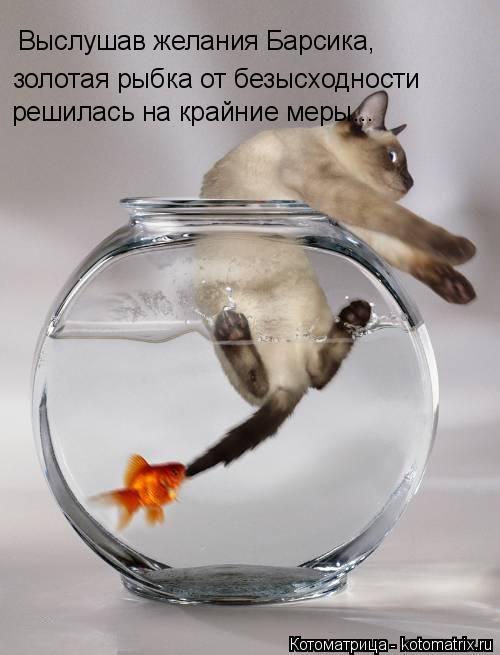 Котоматрица: Выслушав желания Барсика, золотая рыбка от безысходности решилась на крайние меры...