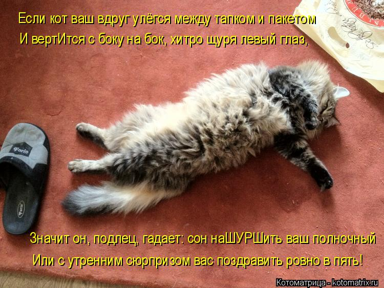Котоматрица: Если кот ваш вдруг улёгся между тапком и пакетом И вертИтся с боку на бок, хитро щуря левый глаз, Значит он, подлец, гадает: сон наШУРШить ваш