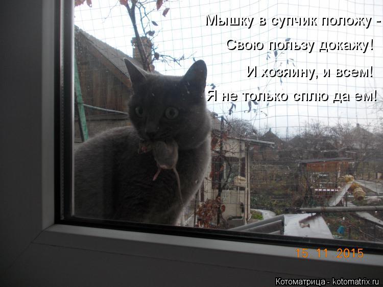 Котоматрица: Мышку в супчик положу - Свою пользу докажу! И хозяину, и всем! Я не только сплю да ем!