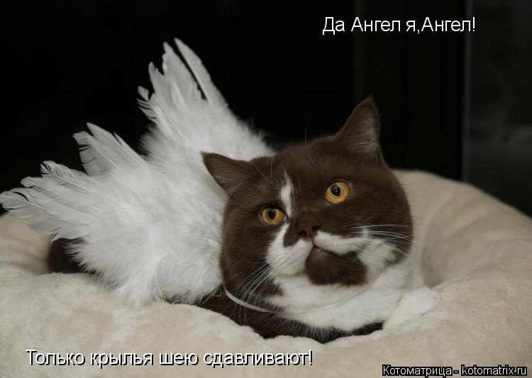 Котоматрица: Да Ангел я,Ангел! Только крылья шею сдавливают!