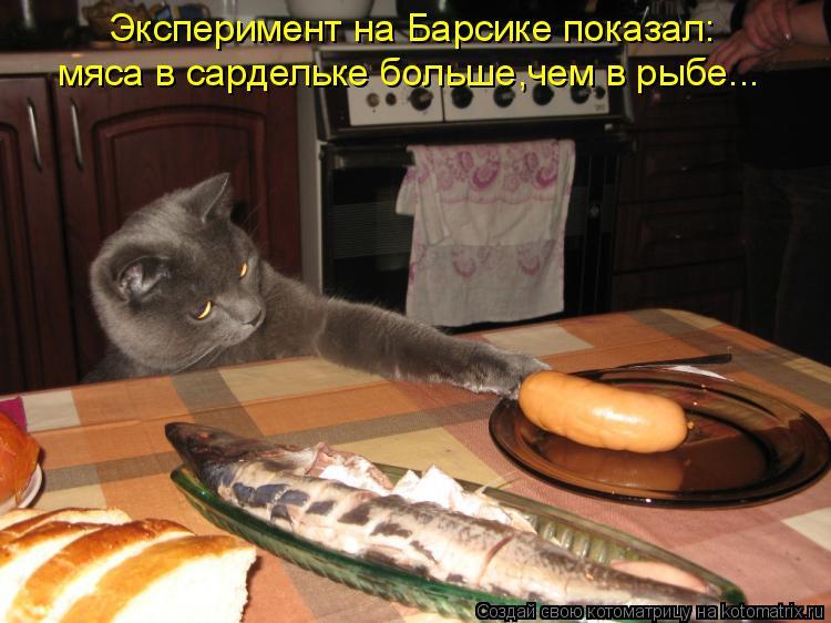 Котоматрица: Эксперимент на Барсике показал: мяса в сардельке больше,чем в рыбе...