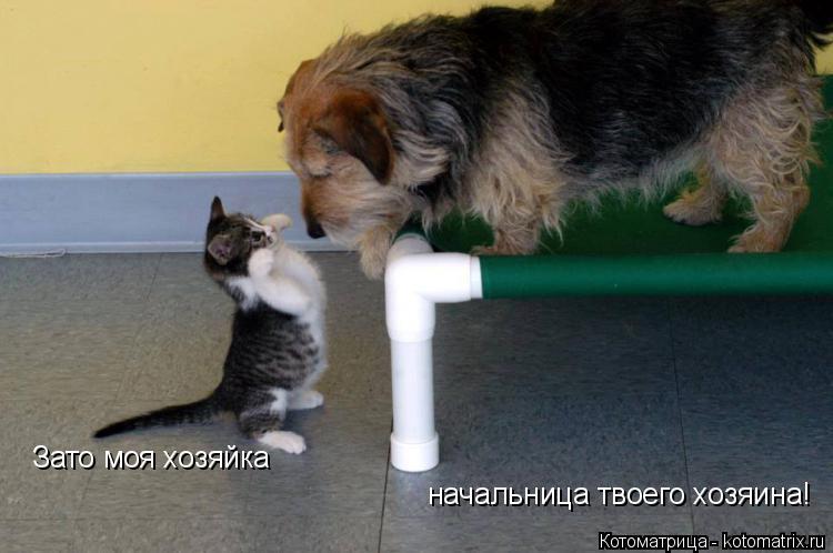 Котоматрица: Зато моя хозяйка начальница твоего хозяина!