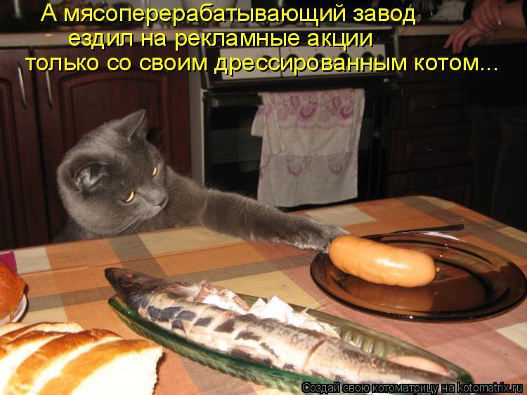 Котоматрица: А мясоперерабатывающий завод ездил на рекламные акции только со своим дрессированным котом...