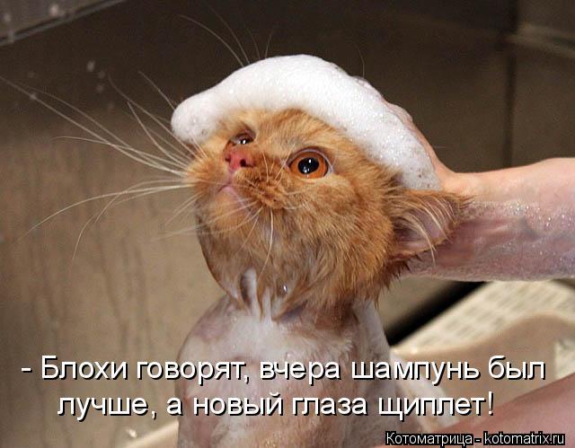 Котоматрица: - Блохи говорят, вчера шампунь был лучше, а новый глаза щиплет!