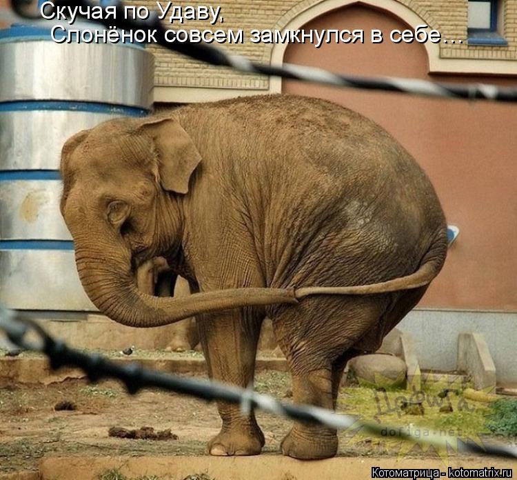 Котоматрица: Скучая по Удаву,  Слонёнок совсем замкнулся в себе…