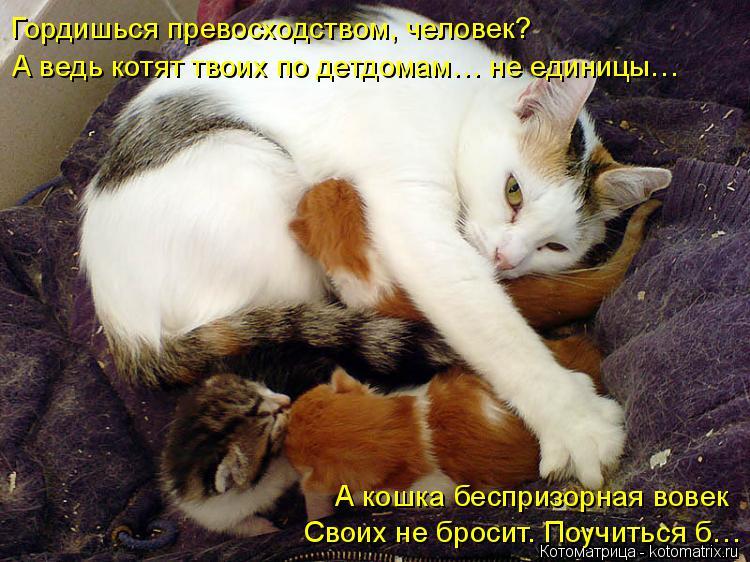 Котоматрица: Гордишься превосходством, человек? А ведь котят твоих по детдомам… не единицы… А кошка беспризорная вовек Своих не бросит. Поучиться б…