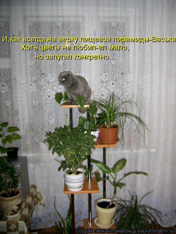 Котоматрица: И,как всегда,на верху пищевой пирамиды-Васька. Хоть цветы не любил-ел мало, но запугал конкретно...