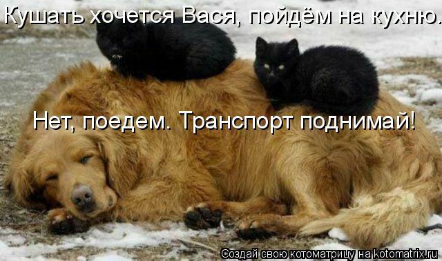 Котоматрица: Нет, поедем. Транспорт поднимай! Кушать хочется Вася, пойдём на кухню.