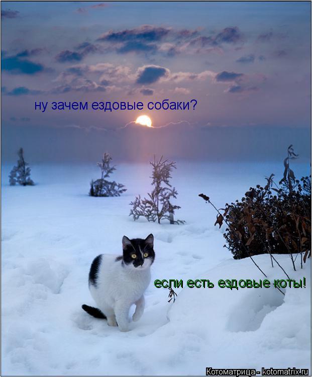 Котоматрица: ну зачем ездовые собаки? если есть ездовые коты!