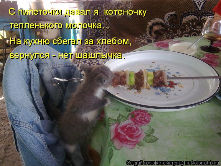 Котоматрица: тепленького молочка... С пипеточки давал я  котеночку  На кухню сбегал за хлебом, вернулся - нет шашлычка.