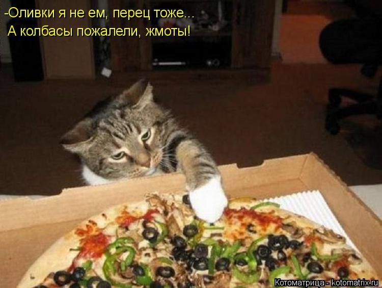 Котоматрица: -Оливки я не ем, перец тоже... А колбасы пожалели, жмоты!
