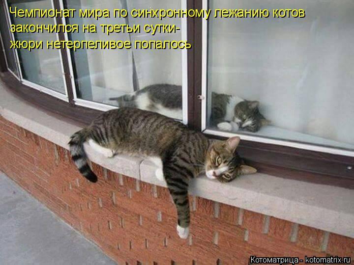Котоматрица: Чемпионат мира по синхронному лежанию котов закончился на третьи сутки-  жюри нетерпеливое попалось