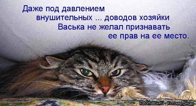 Котоматрица: Даже под давлением внушительных ... доводов хозяйки Васька не желал признавать ее прав на ее место.