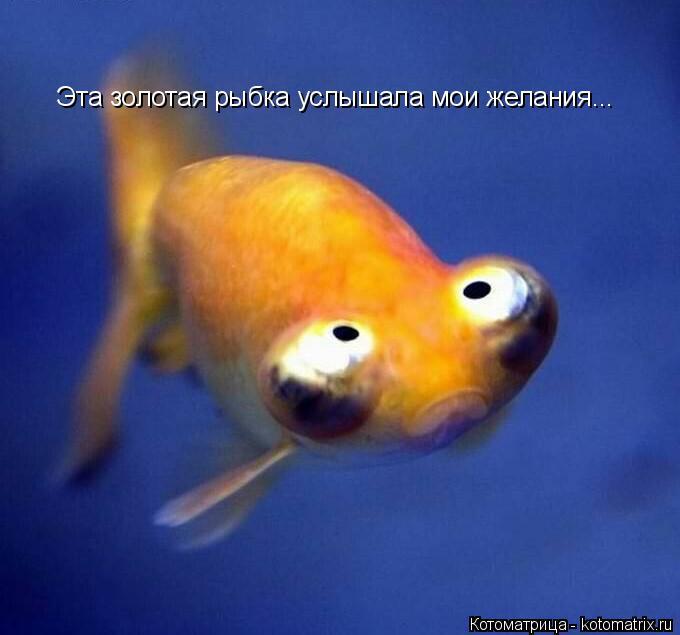 Котоматрица: Эта золотая рыбка услышала мои желания...