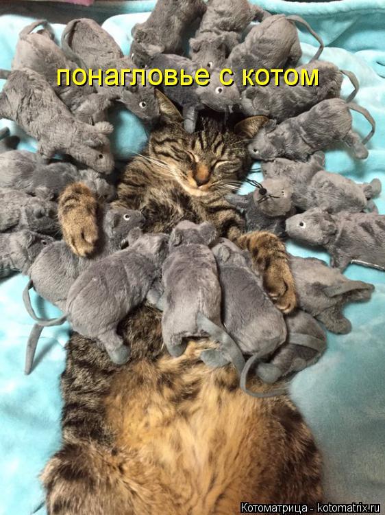 Котоматрица: понагловье с котом