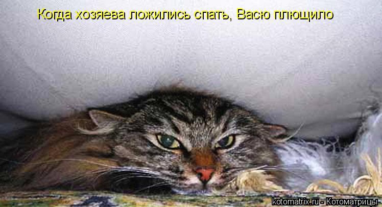 Котоматрица: Когда хозяева ложились спать, Васю плющило