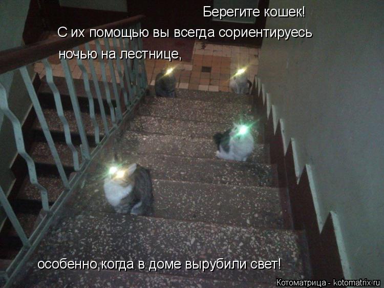 Котоматрица: Берегите кошек!  С их помощью вы всегда сориентируесь ночью на лестнице, особенно,когда в доме вырубили свет!