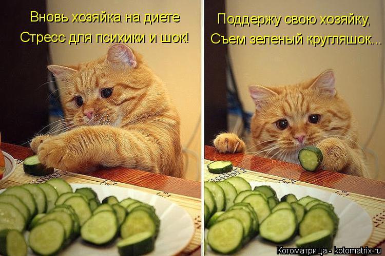 Котоматрица: Вновь хозяйка на диете Стресс для психики и шок!   Поддержу свою хозяйку,  Съем зеленый кругляшок...