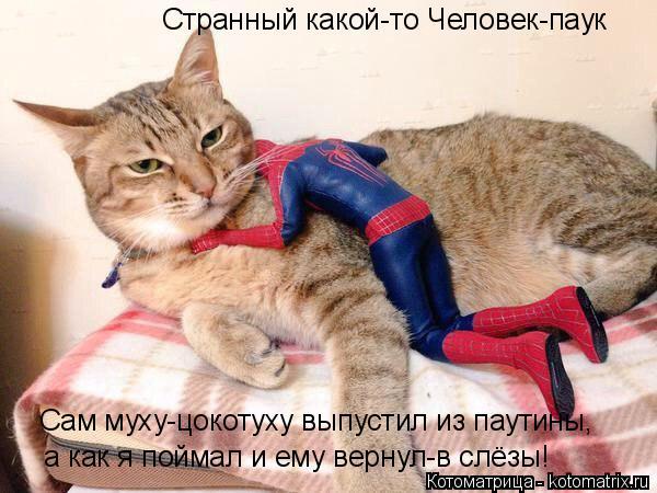 Котоматрица: Странный какой-то Человек-паук Сам муху-цокотуху выпустил из паутины, а как я поймал и ему вернул-в слёзы!