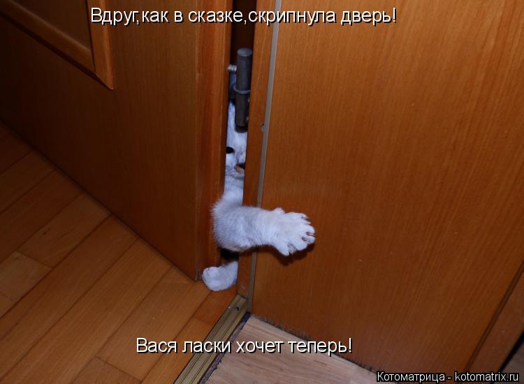 Котоматрица: Вдруг,как в сказке,скрипнула дверь! Вася ласки хочет теперь!