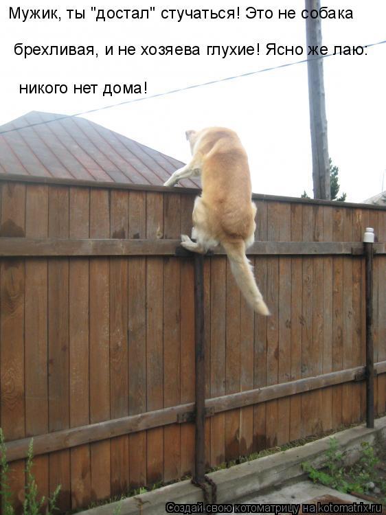 """Котоматрица: Мужик, ты """"достал"""" стучаться! Это не собака  брехливая, и не хозяева глухие! Ясно же лаю:  никого нет дома!"""