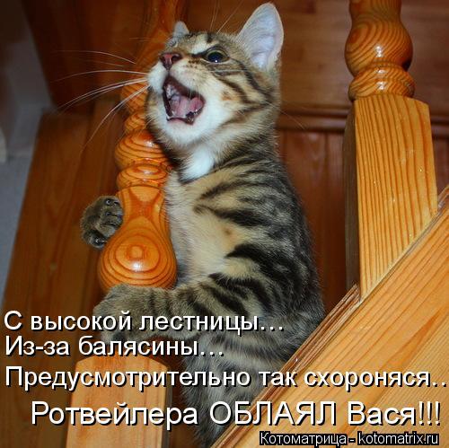 Котоматрица: Предусмотрительно так схороняся… Из-за балясины… С высокой лестницы… Ротвейлера ОБЛАЯЛ Вася!!!