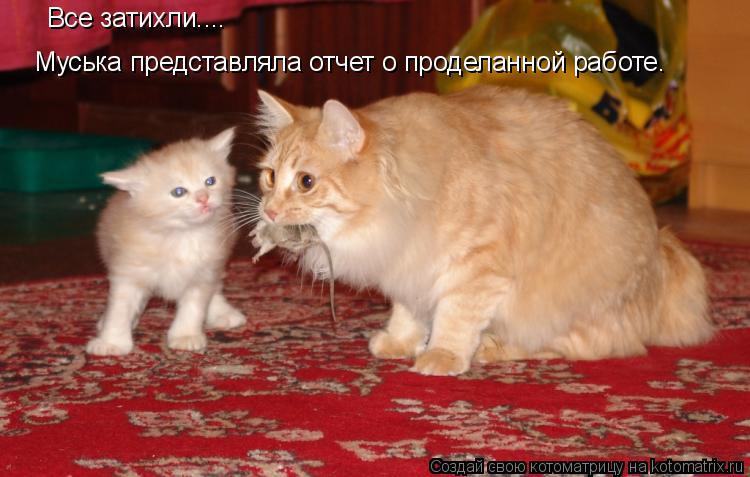 Котоматрица: Муська представляла отчет о проделанной работе. Все затихли....