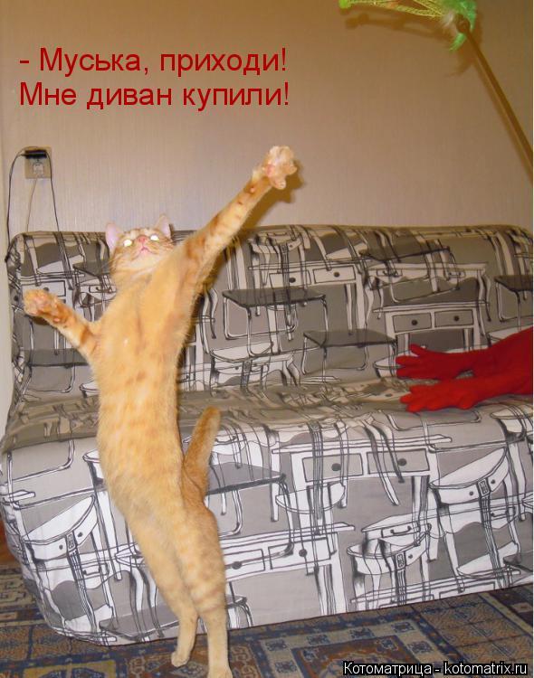 Котоматрица: Мне диван купили! - Муська, приходи!